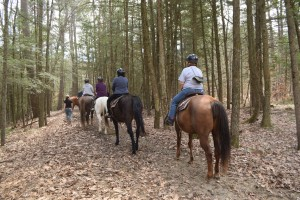 line of people riding horses through woods